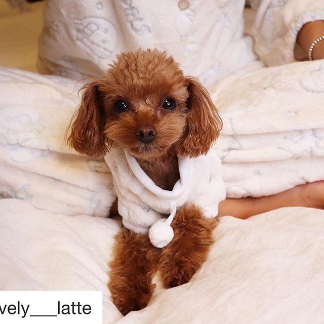 #누나랑커플잠옷
